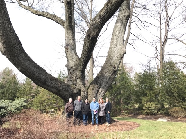 Largest Tree in Wyckoff