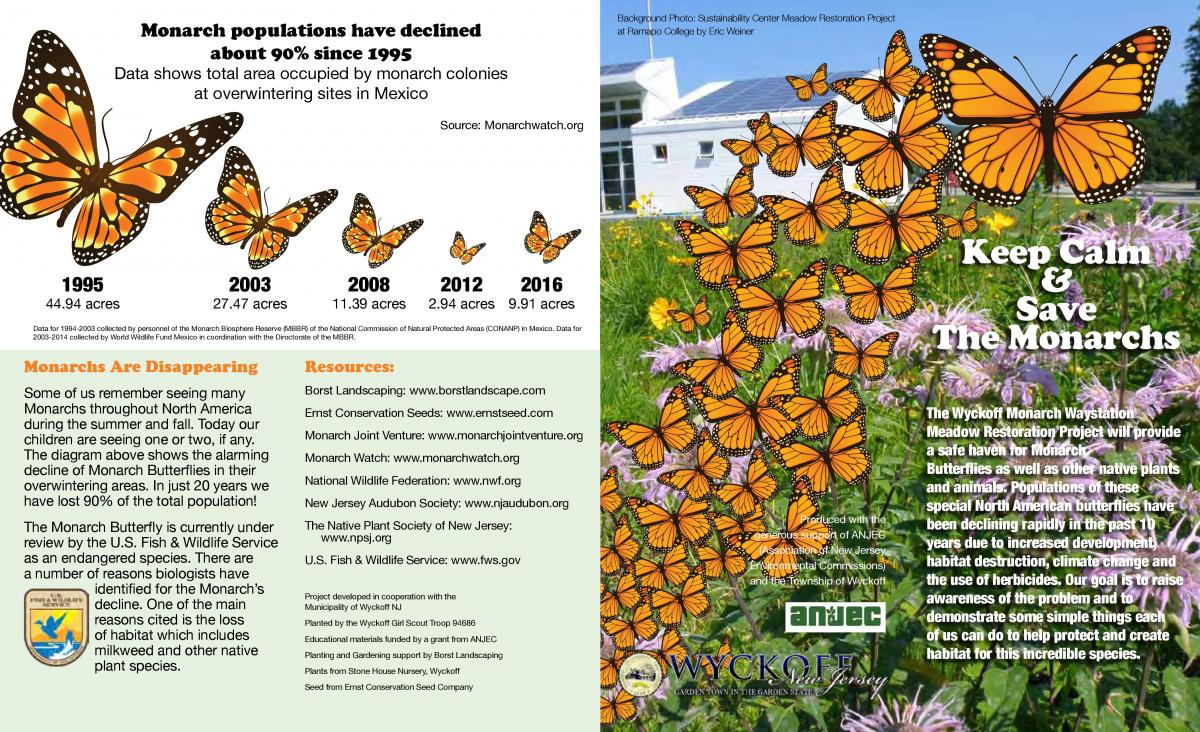 Monarch Butterfly page 1