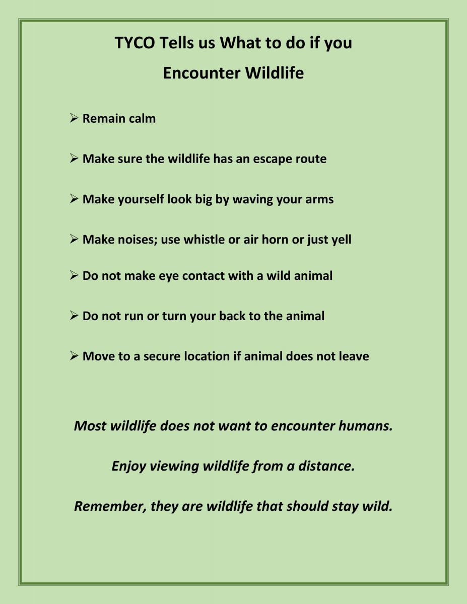 TYCO Wildlife Encounter Tips