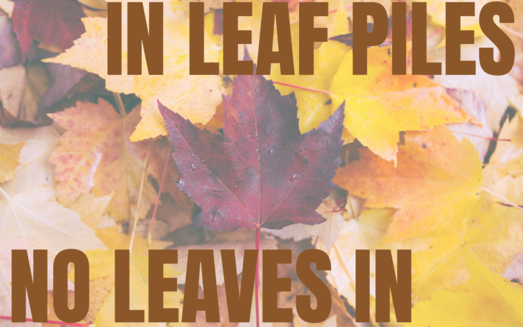 No Branches in Leaf Piles